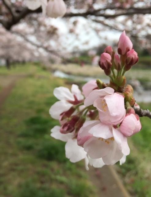夜桜よりも